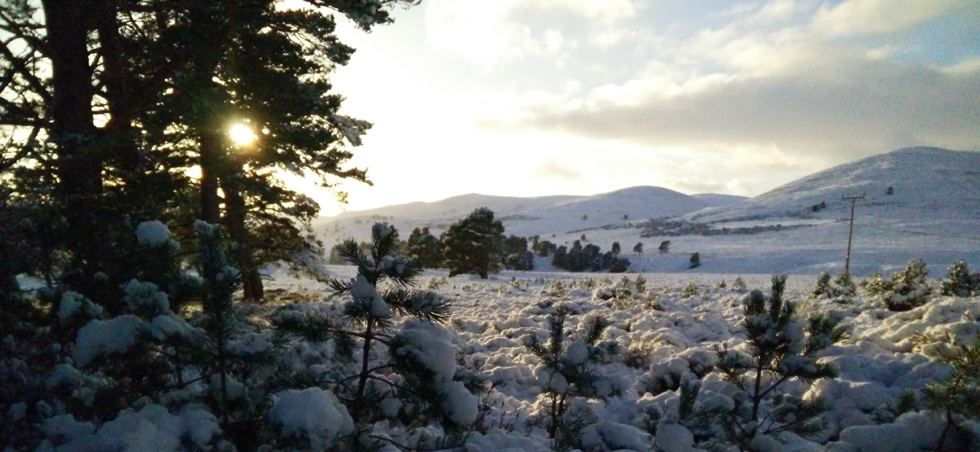 Cairngorms winter landscape