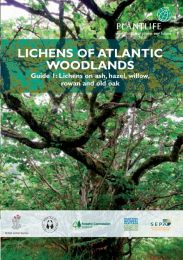 Lichens of Atlantic Woodlands - Guide 1: Lichens on ash, hazel, willow, rowan and old oak