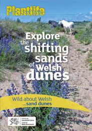 Wild about Welsh ...sand dunes