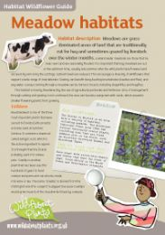 Habitat Wildflower Guides - Meadow