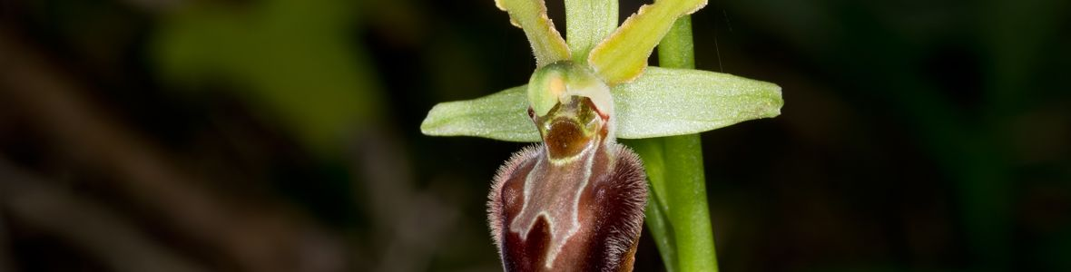EarlySpiderOrchid1180x300-c-iStockGoldfinch4Ever.jpg