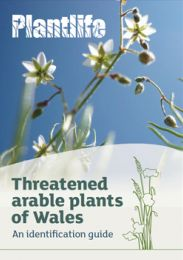 Threatened Arable Plants of Wales
