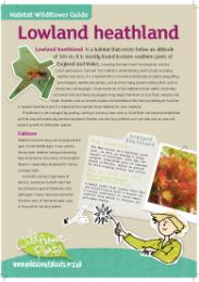 Habitat Wildflower Guides - Lowland Heathland