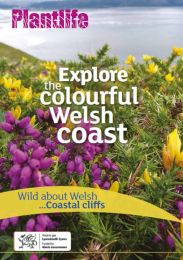 Explore the colourful Welsh coast