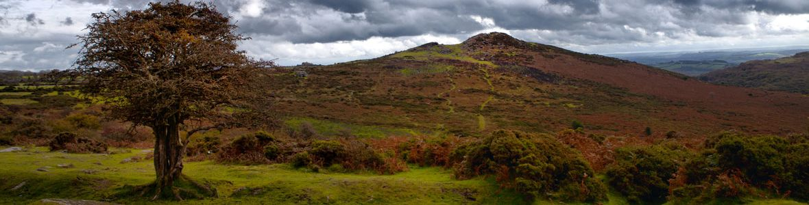 DArtmoor-(c)-Richard-Munckton.jpg