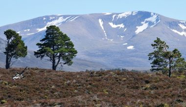 Cairngorms, Scottish Highlands