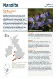 Pale Dog-violet factsheet