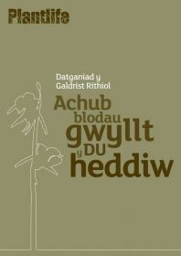 Welsh_Ghost_Orchid01_copy.jpg