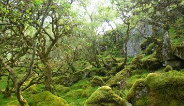 Secrets of the Celtic Rainforest