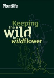 Keeping the Wild in Wildflower