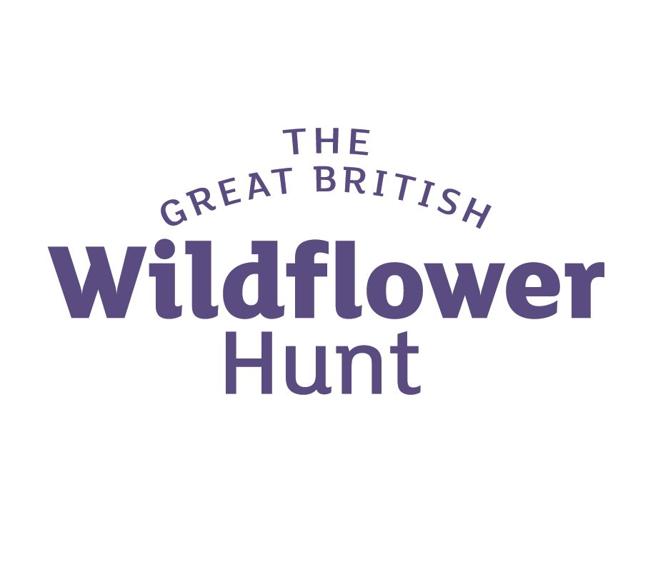 uk wildflower id for kids